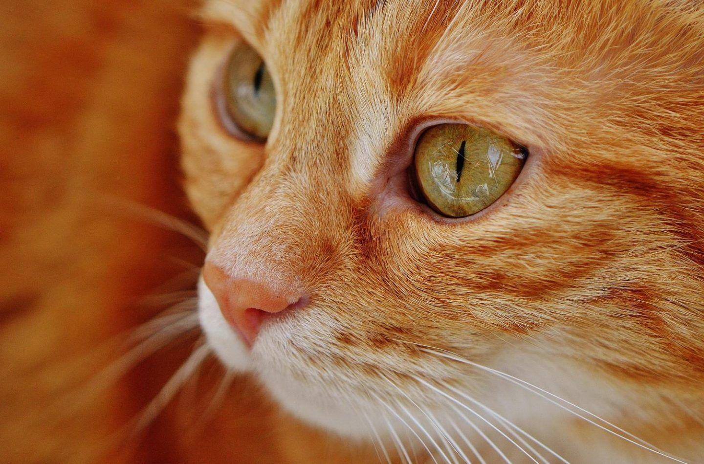 القطط و علاقتها بالانسان ما بين العلم و الخرافة