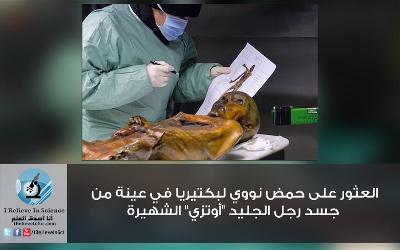 """العثور على حمض نووي لبكتيريا في جسد رجل الجليد """"أوتزي"""" الشهيرة"""