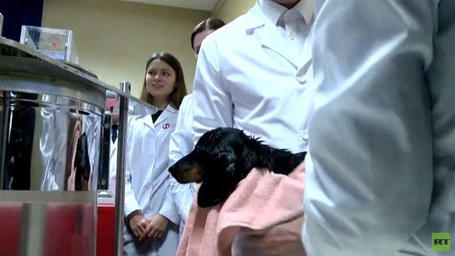 تجارب روسية: كلاب أصبحت تتنفس تحت الماء
