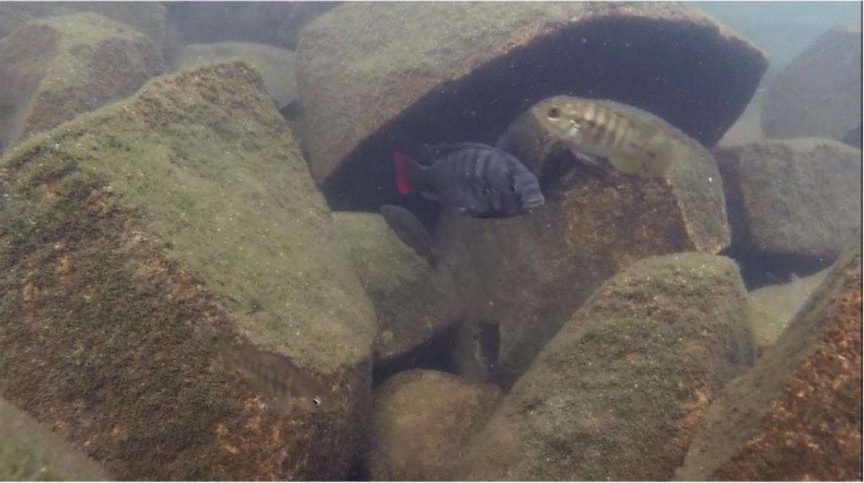 توصل العلماء الى حل لتطور الاسماك الغامض