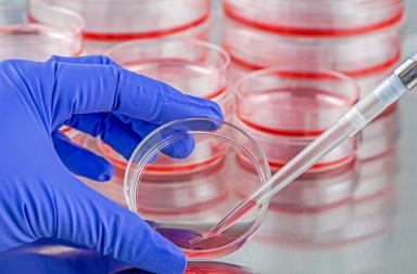 المكورات المعوية المقاومة للفانكوميسين VRE: الأسباب والأعراض والتشخيص والعلاج - عدوى بكتيرية تقاوم مضادًّا حيويًّا هو فانكوميسين