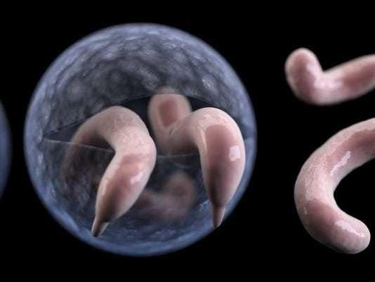 داء خفيات الأبواغ: ما تحتاج أن تعرفه خمج طفيلي في الأمعاء الدقيقة يسبب الإسهال بشكل أساسي نقص المناعة المصابين بفيروس HIV أو الإيدز