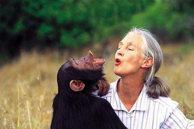 هناك تشابه غريب بين طريقة تواصل الشمبانزي ولغة البشر