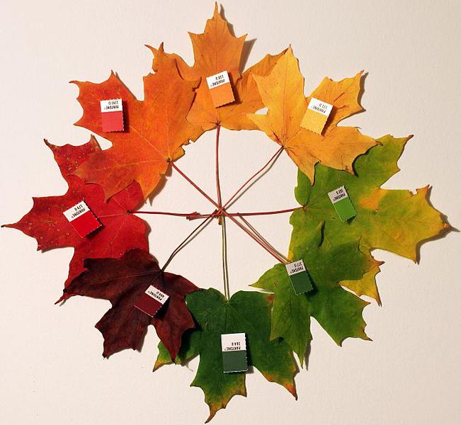 لماذا تتغير ألوان أوراق الشجر في الخريف؟