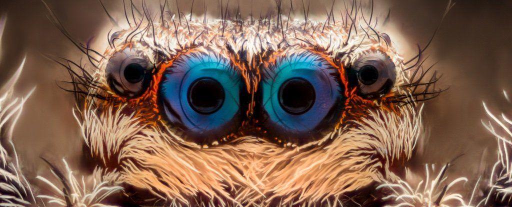 لدى العلماء سلاح سري للقضاء على رُهَاب العناكب وهو مُخبأ داخلك