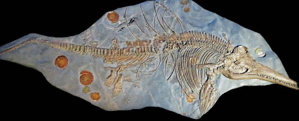 مفاجأة عمرها 200 مليون سنة، هذه الأحفورة تعود لأكبر تنين بحري على الإطلاق