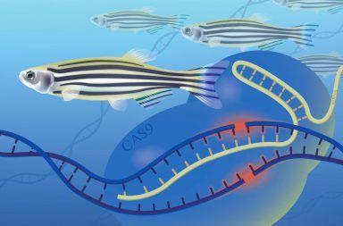 طريقة جديدة لتحديد وظائف الجينات ستمكننا من فهم عمليات الحياة فهم العلماء لكيفية عمل الجينات يمهد الطريق أمام معرفتنا للعمليات الحيوية