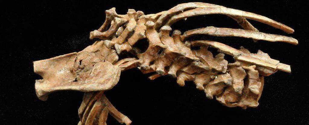 مستحاثة عمرها 3.3 مليون سنة قد تحمل معلومات عن أصل العمود الفقري البشري