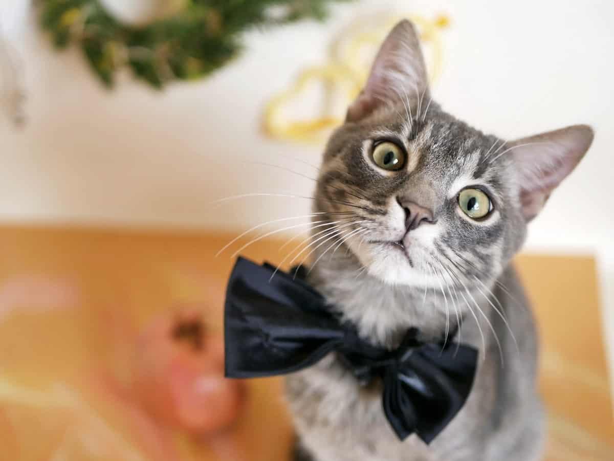 أظهرت دراسة أن تعابير وجه القطط لا يمكن لجميع البشر قراءتها