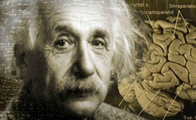 من سرق دماغ أينشتاين؟