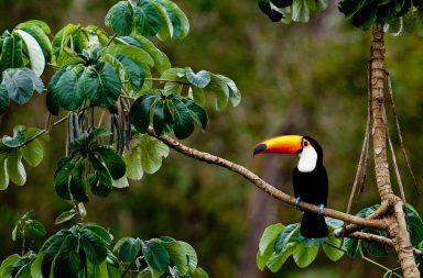 سحر غابات الأمازون نهر الأمازون الغابات المطيرة الدلفين الزهري قرش الثور الأحياء المائية الأحياء الطبيعية ثاني أكبر نهر في العالم
