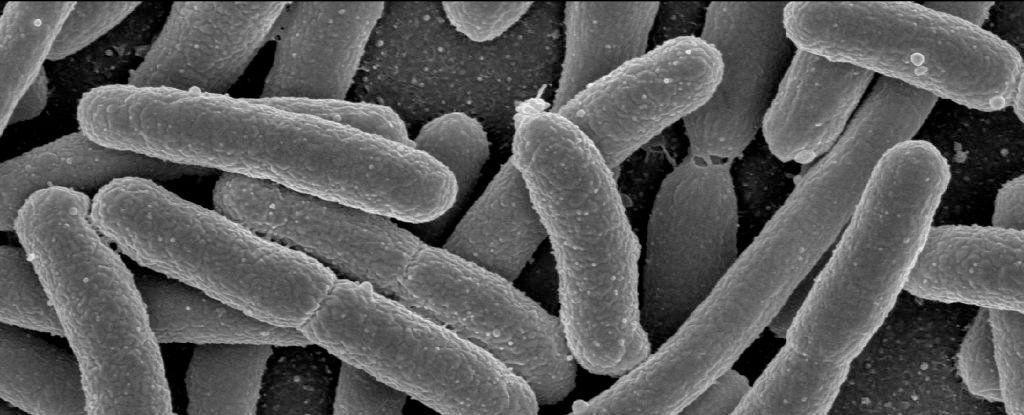 كائنات حيّة تُوضع في تشابك كموميّ للمرة الأولى