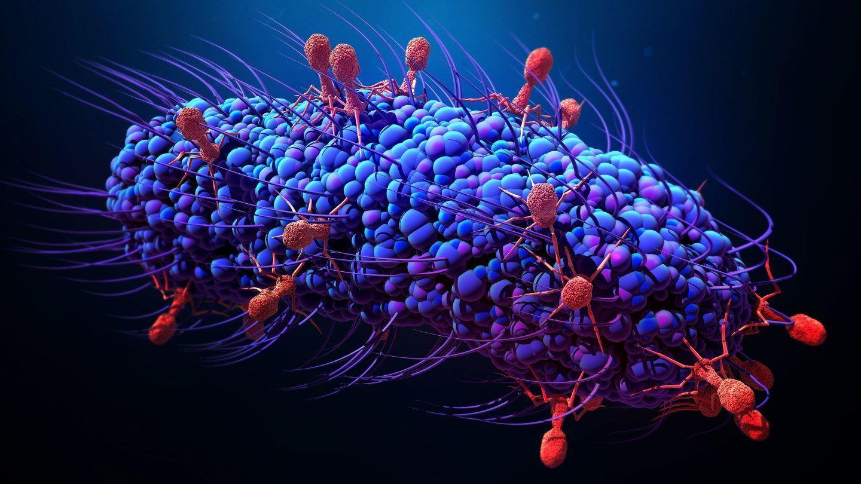 ما هي البكتيريا (الجراثيم)؟ هل جميعها ضارة؟ ومتى تم اكتشافها