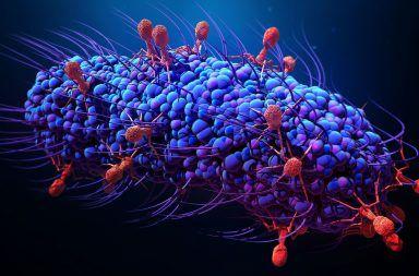 ما هي البكتيريا ما هي الجراثيم كيف تتكاثر الخلايا البكتيرية مقاومة الجراثيم للمضادات الحيوية الحمض النووي الريبي الخلايا خيققية النواة