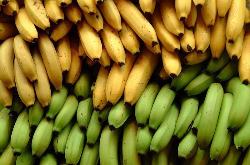 يختلف الموز الناضج وغير الناضج بالفوائد الصحية، فأيهما سوف تختار؟
