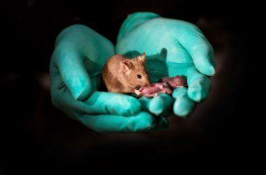 لدى بعض الحيوانات والنباتات القدرة على تغيير الجنس جينيًا كيف تمكن العلماء من تغيير جنس أجنة بعض الحيوانات قبل الولادة تغغير الجنس وراثيًا
