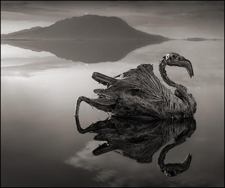 بحيرة النطرون - بحيرة الأموات! - أنا أصدق العلم