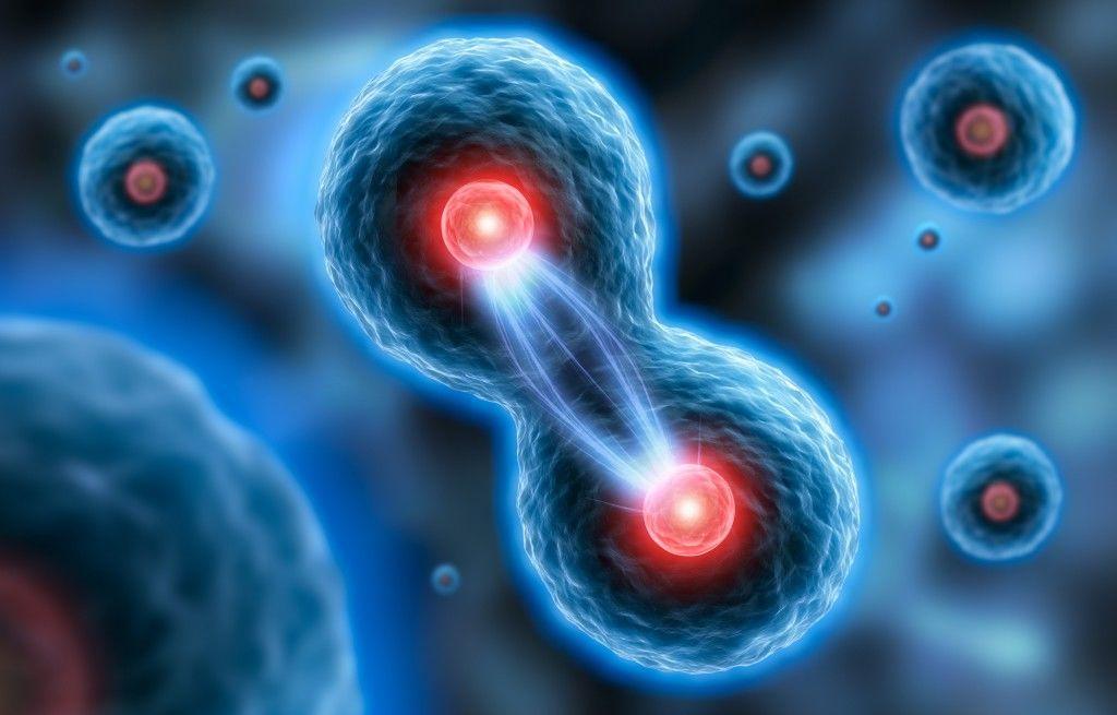 الانقسام الخلوي انقسام الخلية الخلياا الحية بدائيات النوى الانشاطار الثنائي حقيقيات النوى