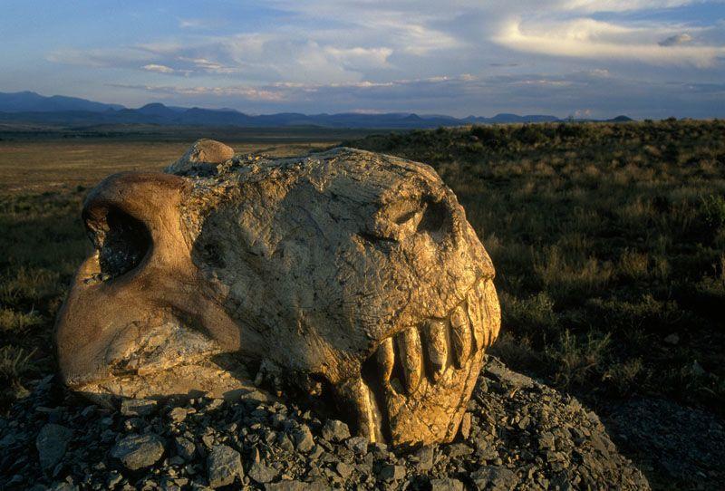 كيف يحصل الانقراض الجماعي العصر الطباشيري عصور ما قبل التاريخ ظهور الثديات على الأرض انقراض الديناصورات انقراض الأنواع الحية