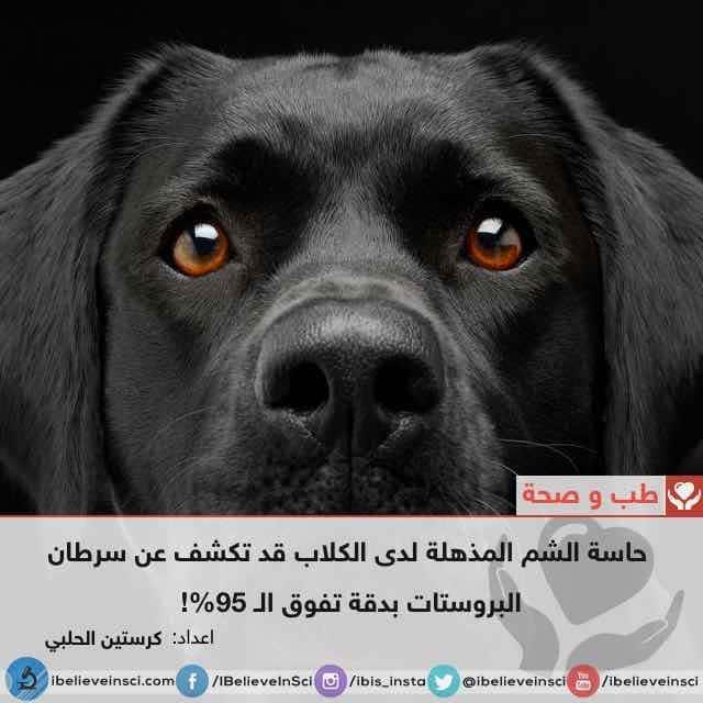 حاسة الشم المذهلة لدى الكلاب قد تكشف عن سرطان البروستات بدقة تفوق الـ 95%!