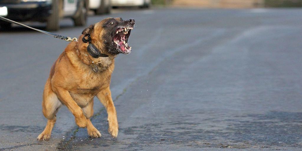 إذا واجهت كلبًا فكيف تتفادى هجومه عليك؟