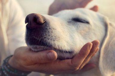 منبر البحوث المتخصصة والدراسات العلمية  يشاهده  23456 زائر Dogagescience_1024-384x253