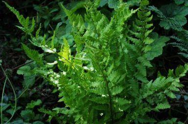 مملكة النباتات الطحالب الخضراء البنية الحمراء السراخس الكبدية الطحالب مثل الفوناريا السراخس النباتات ذات البذور الأزهار الأوراق