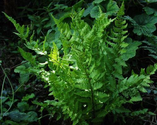 مملكة النباتات
