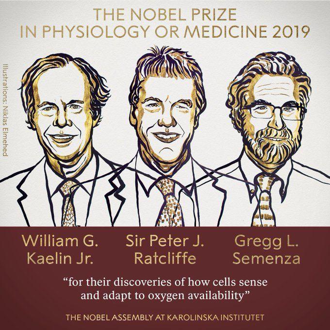 جائزة نوبل في الطب عام 2019