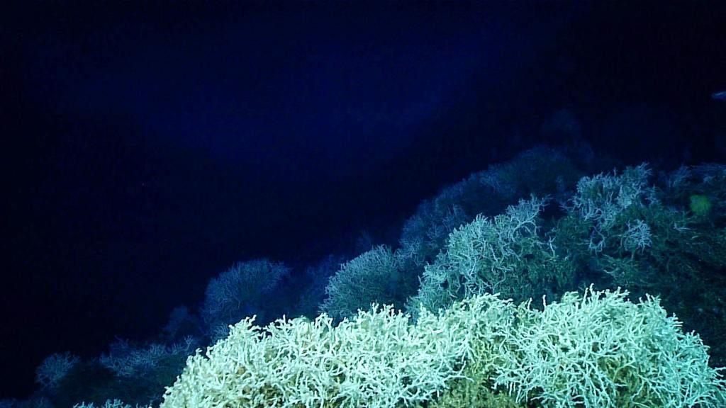 أسرار المحيط ماذا يوجد في قاع المحيط الأسرار في قاع البحر كائنات القاع سطح البحر المسطحات المائية العميقة الماء الأرض الخنادق المحيطية