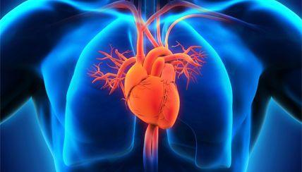 لماذا تمتلك اجسامنا قلبا واحدا ورئتين وليس العكس ؟