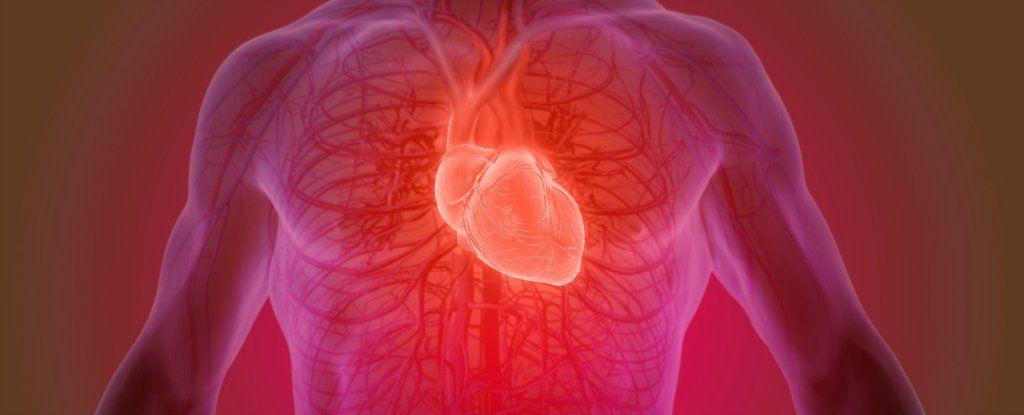 هل نملك حقًا عدد محدد من دقات القلب خلال مسيرة حياتنا؟ إليك ما يقوله العلم