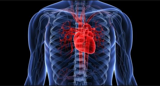 كيفية عمل القلب
