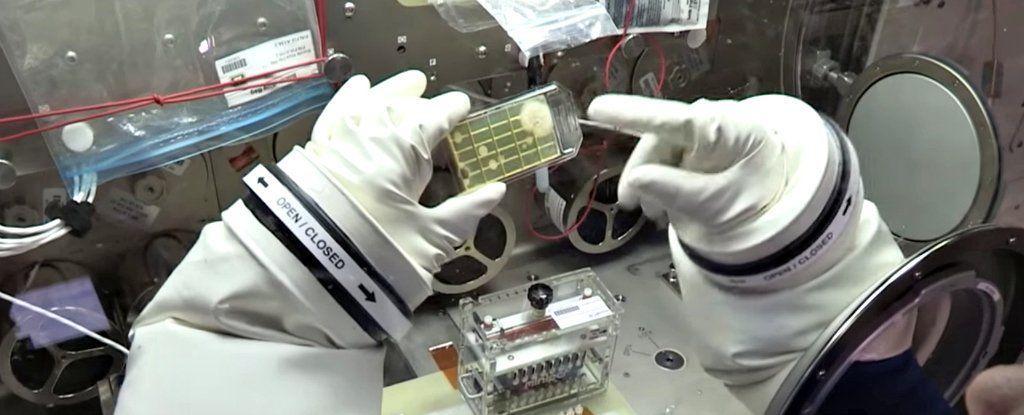 اكتشاف أول ميكروبات في الفضاء والمحطة الدولية تبحث الموضوع