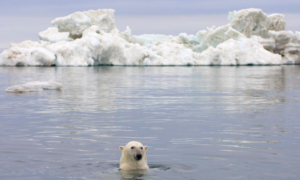 حقائق مثيرة عن المحيط المتجمد الشمالي
