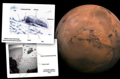 عالم حشرات يدعي وجود صور تظهر أدلة على الحياة في المريخ - حشرات ذات بنية مشابهة للنحل تعيش على كوكب المريخ - كائنات شبيهة بالزواحف - الحشرات