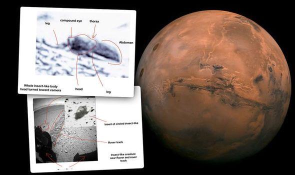 عالم حشرات يدعي وجود صور تظهر أدلة على الحياة في المريخ