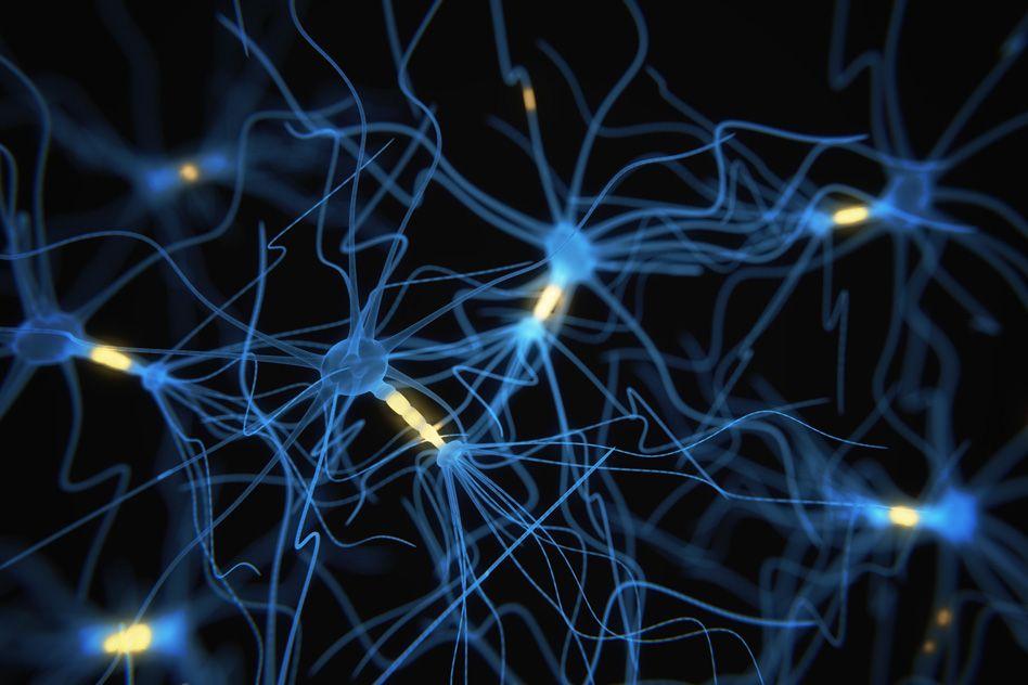 اكتشاف الخلايا العصبية المسئولة عن الساعة البيولوجية بالدماغ! - قياس التموجات الكهربية السريعة للخلايا العصبية المنفردة في منطقة اللمس من الدماغ