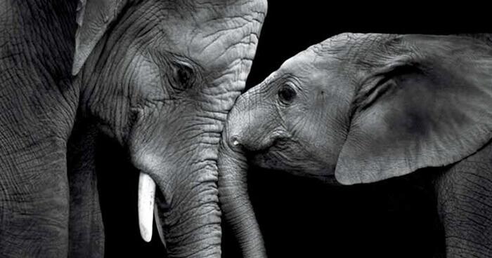 هل الحيوانات واعية ؟ وما هو مفهوم الوعي لديها؟ - الحيوانات تملك وعيًا.. ويجب علينا معاملتها وفقًا لذلك - هل تفكر الحيوانات مثلما يفكر البشر؟