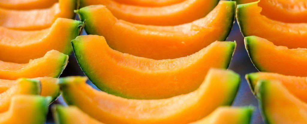 السالمونيلا في البطيخ يصيب العشرات والموضوع مرشح لتفشٍ خطير