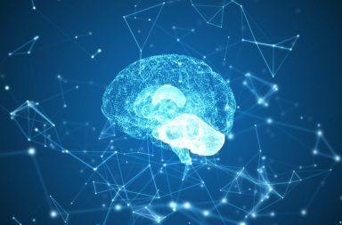 الذاكرة: كيف تتشكل الذكريات في الدماغ كيف تعمل الذاكرة طويلة الأمد وقصيرة الأمد المشابك العصبية في الدماغ النشاط العصبي لمنطقة الحصين