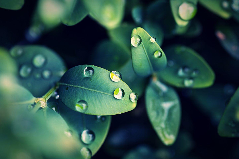 أظهرت دراسة جديدة أن النباتات تصاب بالذعر أثناء المطر