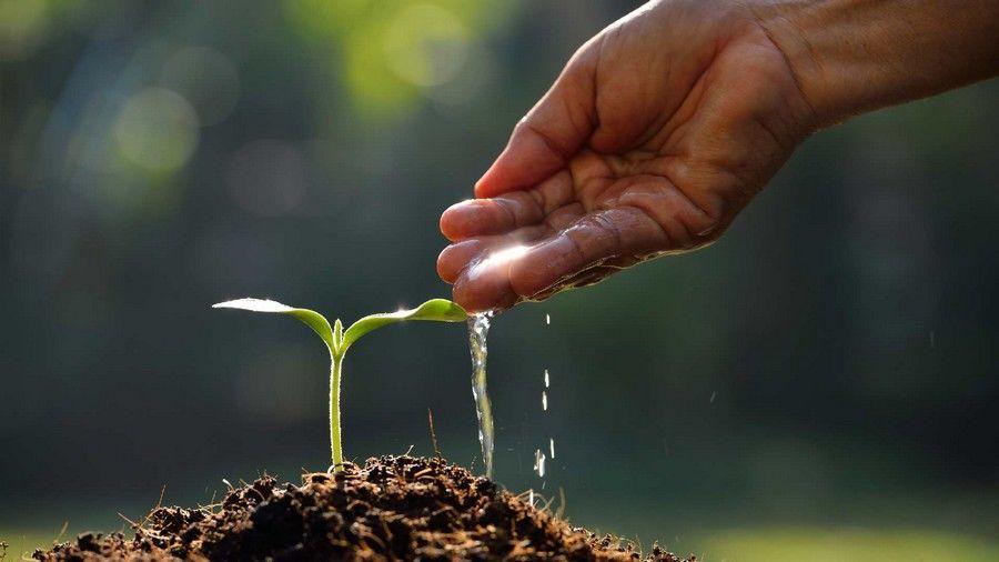 ما هي مكونات الذرة مما تكون البذرة ماذا يوجد داخل البذور كيف تتكاثر النباتات مما تتكون البذور الإندوسبيرم الغلاف الجنين المحور الجنيني
