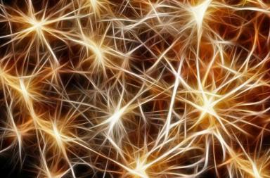 وسيلة جديدة تمكن الباحثين من مشاهدة العصبونات في أثناء إجراء الحسابات - الدماغ يشبه الحاسوب، تشغل فيه الخلايا العصبية وظيفة الدوائر الكهربائية