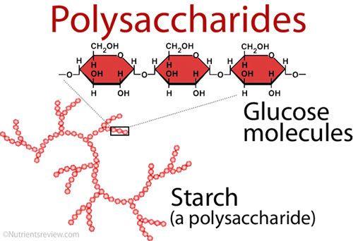 ما هي السكريات قليلة التعدد و السكريات المتعددة وما الفرق بينها الكربوهيدرات البسيطة الكربوهيدرات المعقدة البوليميرات النشاء