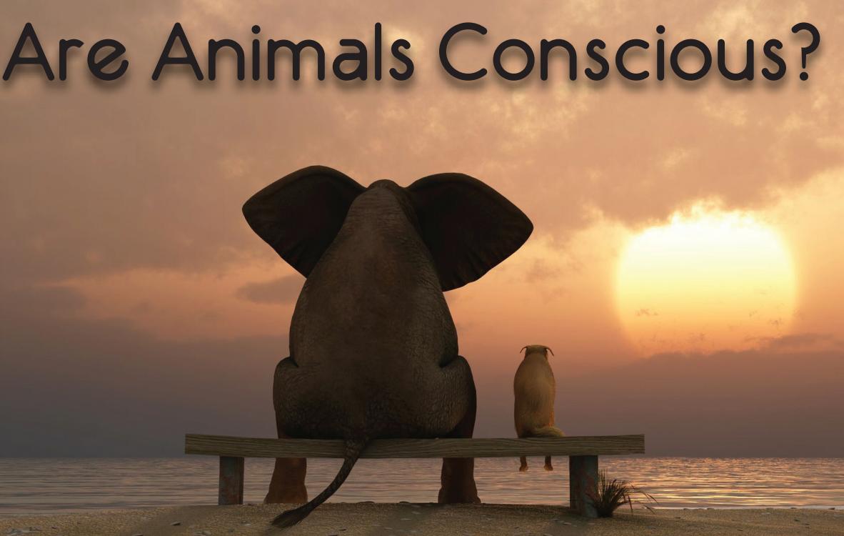 هل الحيوانات واعية ؟ وما هو مفهوم الوعي لديها؟
