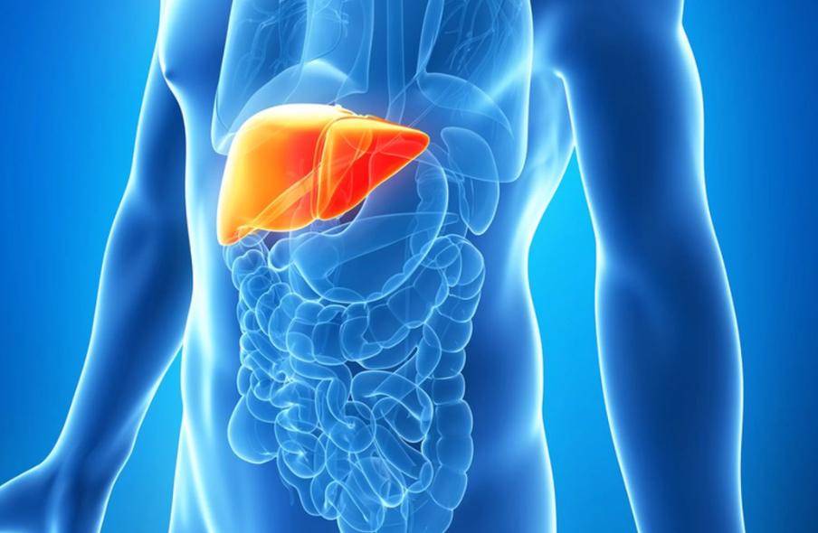 سرطان الكبد.. الأعراض والتشخيص والعلاج