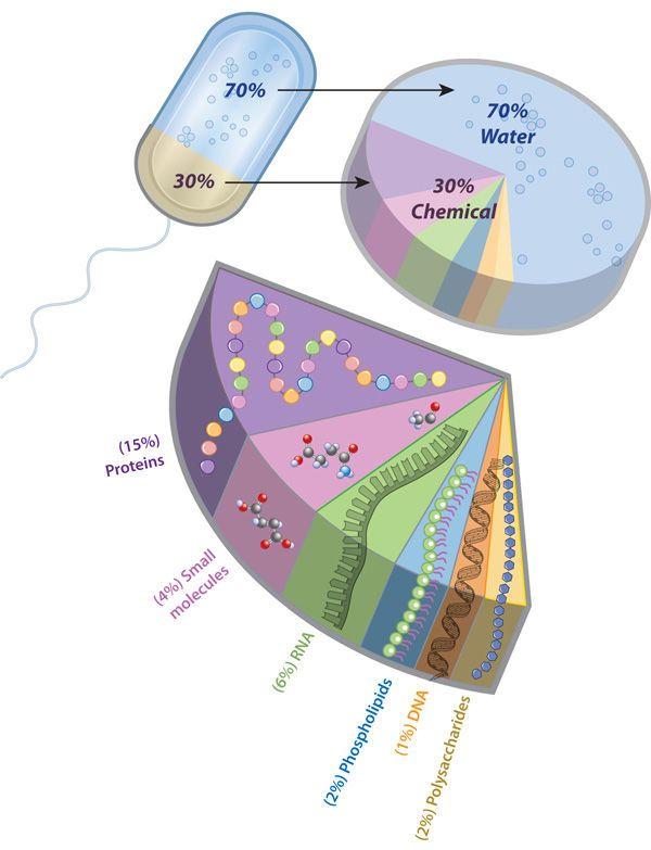مكونات الخلية الحية الخلايا