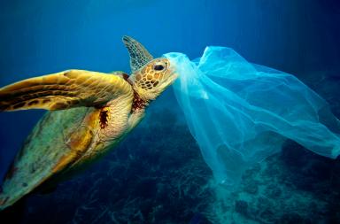 ما مدى خطورة الأكياس البلاستيكية على البيئة؟ - ما هي آثار استخدام أكياس البلاستيك على البيئة - ما علاقة الأكياس البلاستيكية بالتلوث