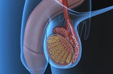 التهاب الخصية Orchitis: الأسباب والأعرض والتشخيص والعلاج الإصابة بفيروس النكاف تورم كيس الصفن أسباب الإصابة بالتهاب الخصيتين